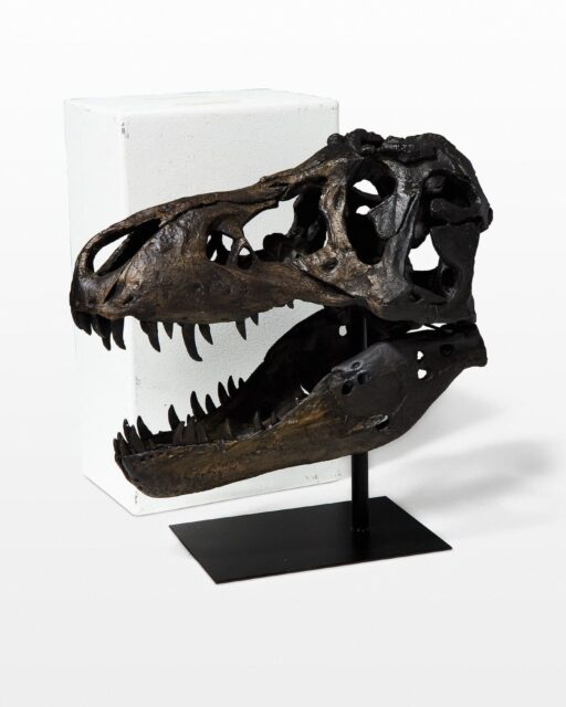 Front view of Tex Tyrannosaurus Bust
