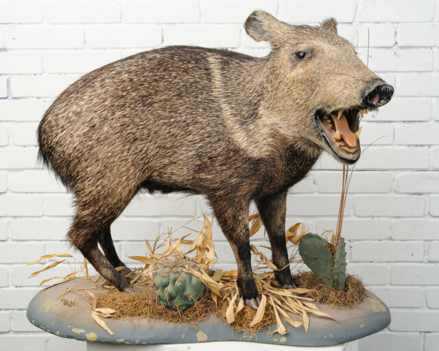 Alternate view 1 of Standing Boar