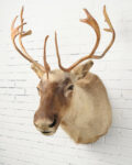 Front view thumbnail of Large Elk Mount