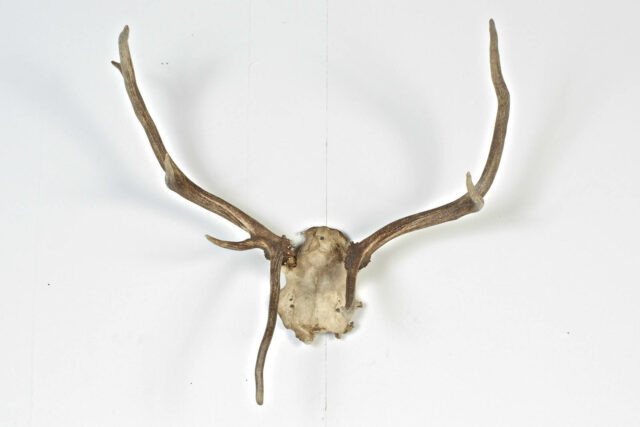 Front view of Antlers