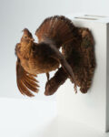 Front view thumbnail of Feathered Bird Wall Mount