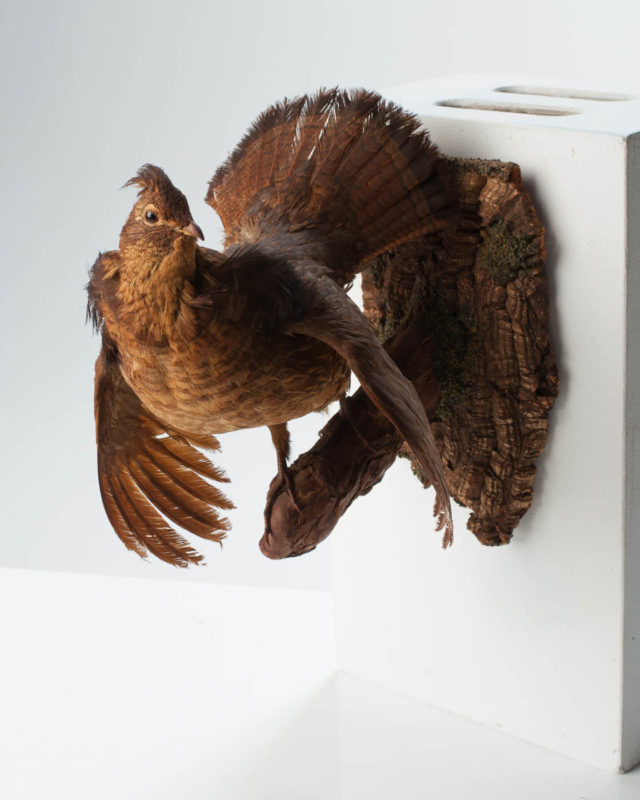 Front view of Feathered Bird Wall Mount
