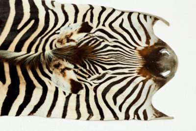 Alternate view 2 of Kali Zebra Hide