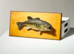 Alternate view thumbnail 1 of Captree Mounted Fish