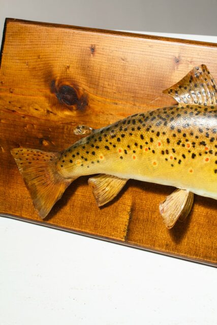Alternate view 3 of Harrow Mounted Fish