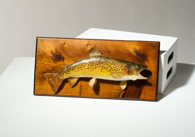 Alternate view 1 of Harrow Mounted Fish