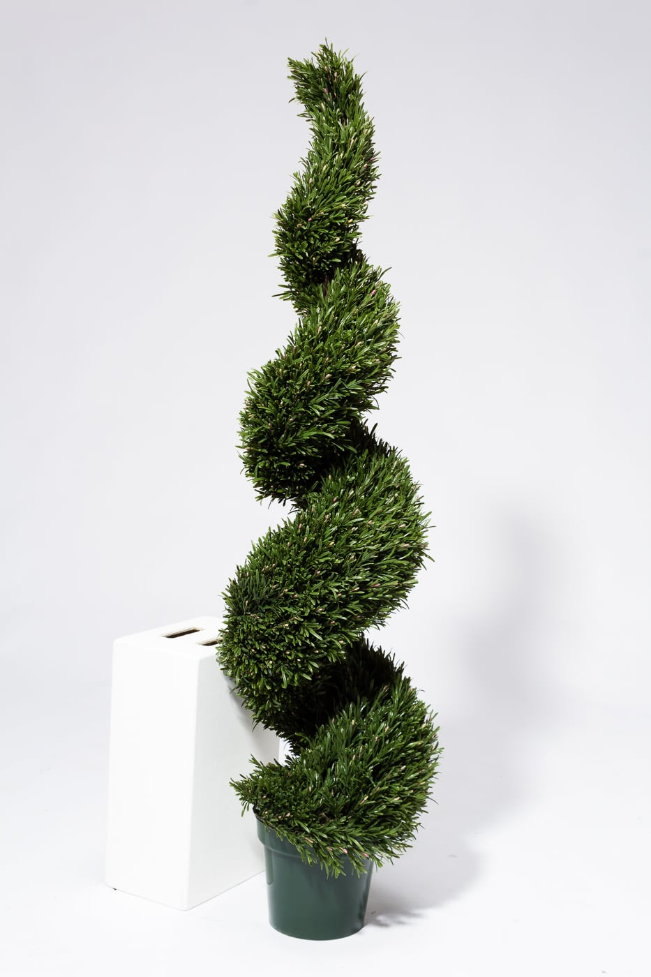 Fp002 5 Faux Rosemary Spiral Topiary Tree Prop Rental