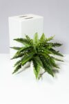 Alternate view thumbnail 2 of Reid Potted Faux Fern