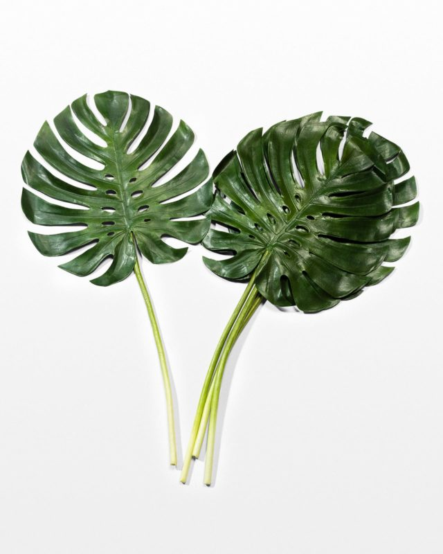 Front view of Set of 4 Faux Monstera Leaves