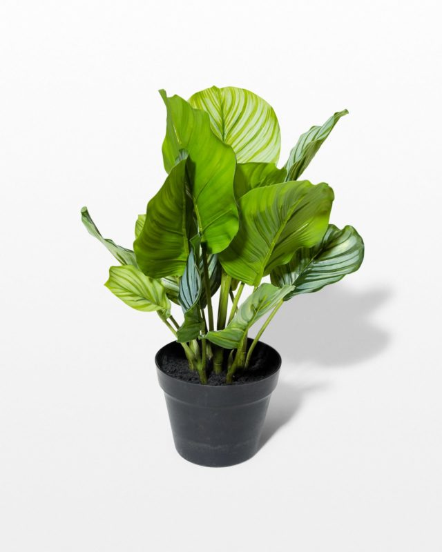 Front view of Brad Potted Faux Burdock Plant
