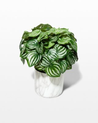 Front view of Britt Potted Faux Peperomia Plant