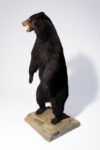 Alternate view thumbnail 6 of Oswald Standing Bear