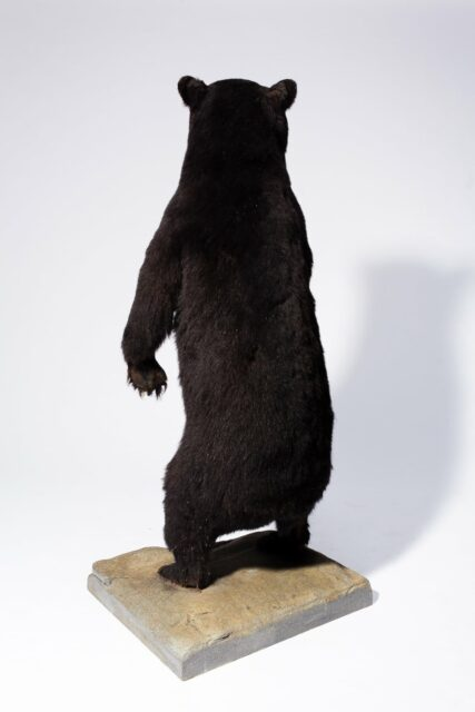 Alternate view 7 of Oswald Standing Bear