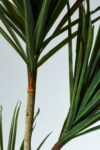 Alternate view thumbnail 3 of Bay Potted Yucca Tree