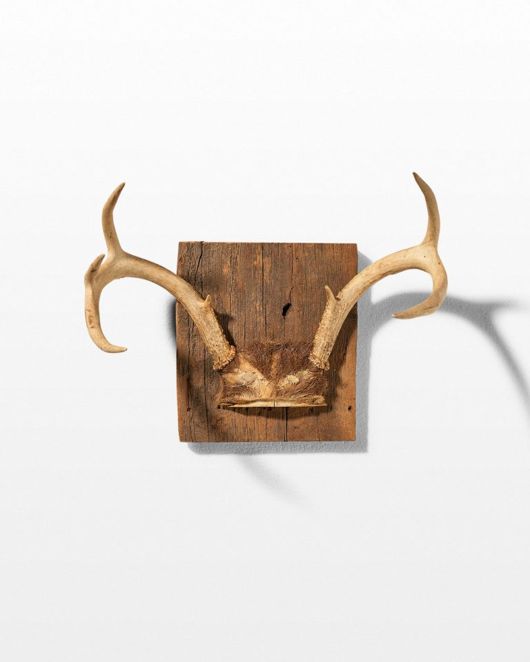 Front view of Square Antler Mount