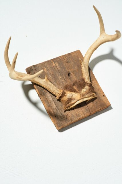 Alternate view 2 of Square Antler Mount