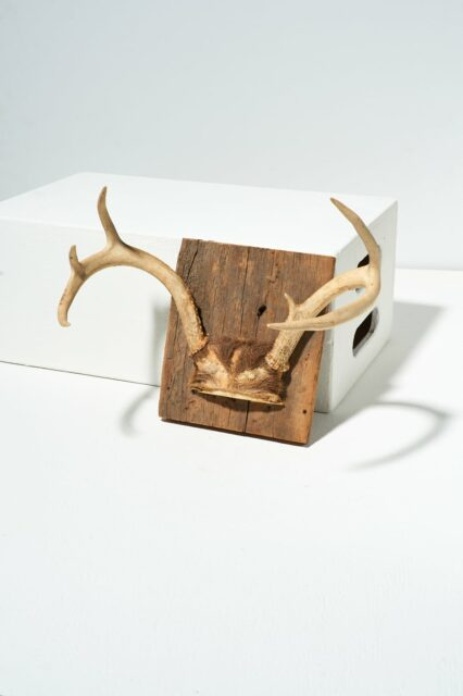 Alternate view 1 of Square Antler Mount