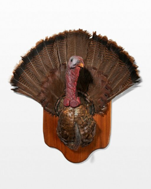 Front view of Turkey Wall Mount