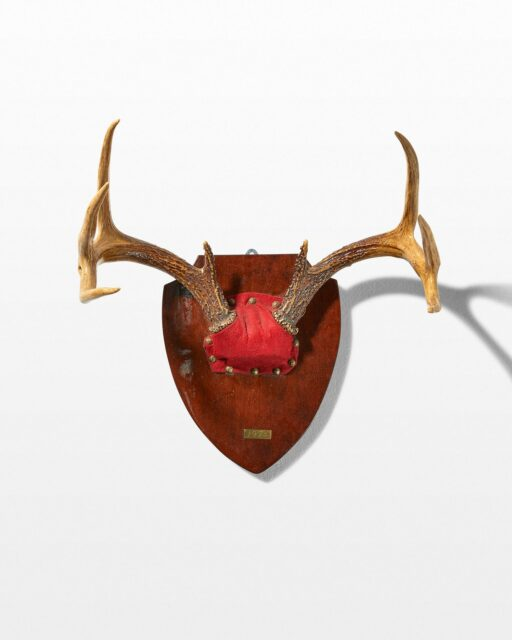 Front view of Redd Antler Mount
