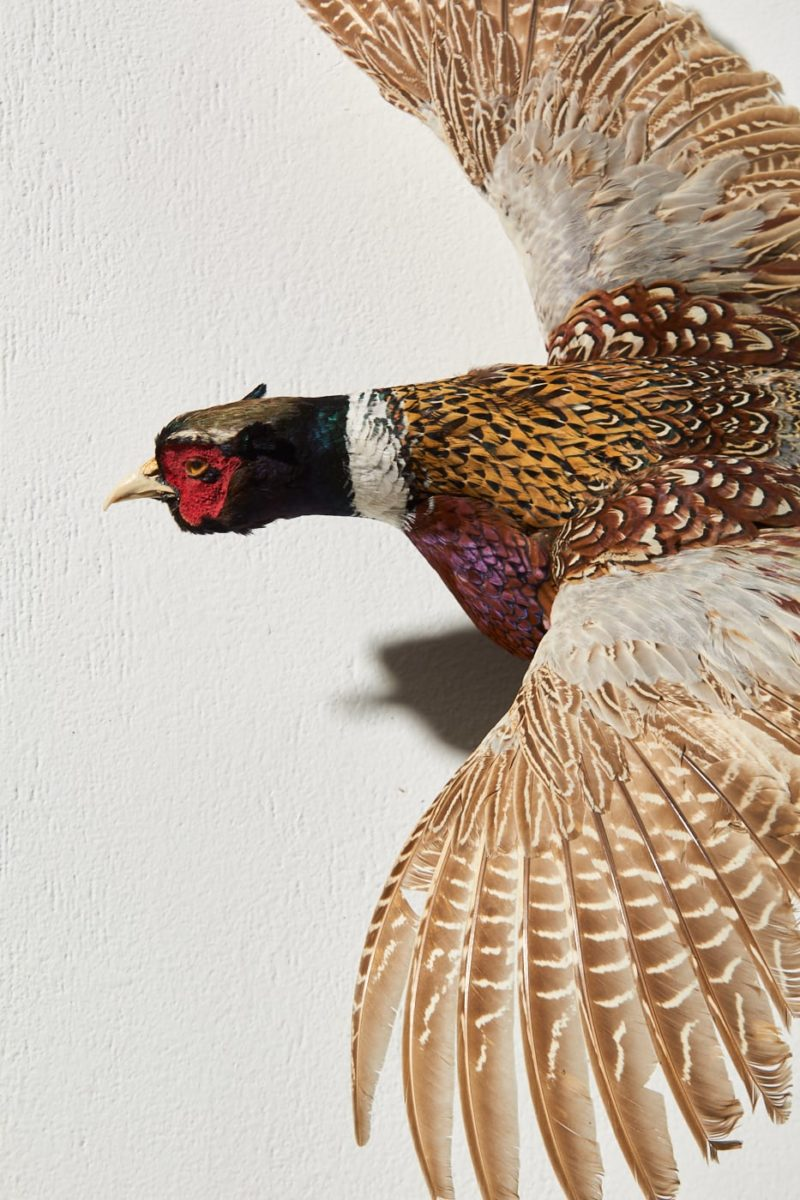 Alternate view 1 of Pheasant in Flight Wall Mount
