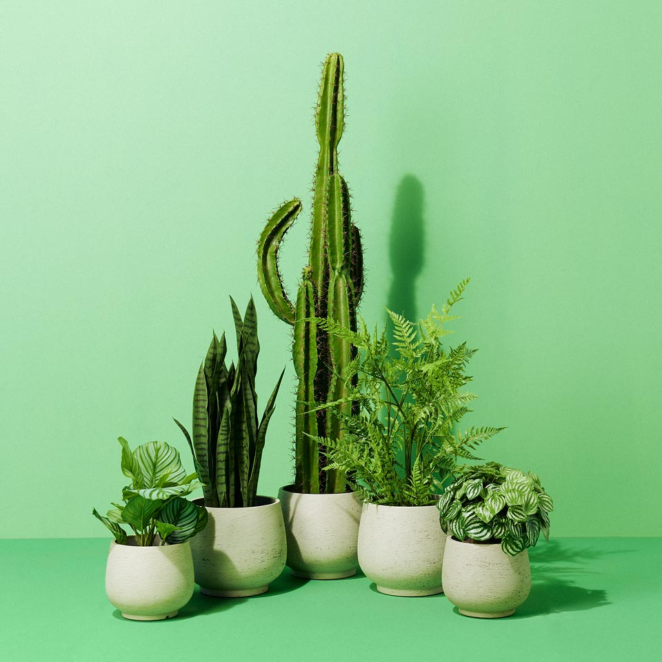 Category: Faux Plants and Planters