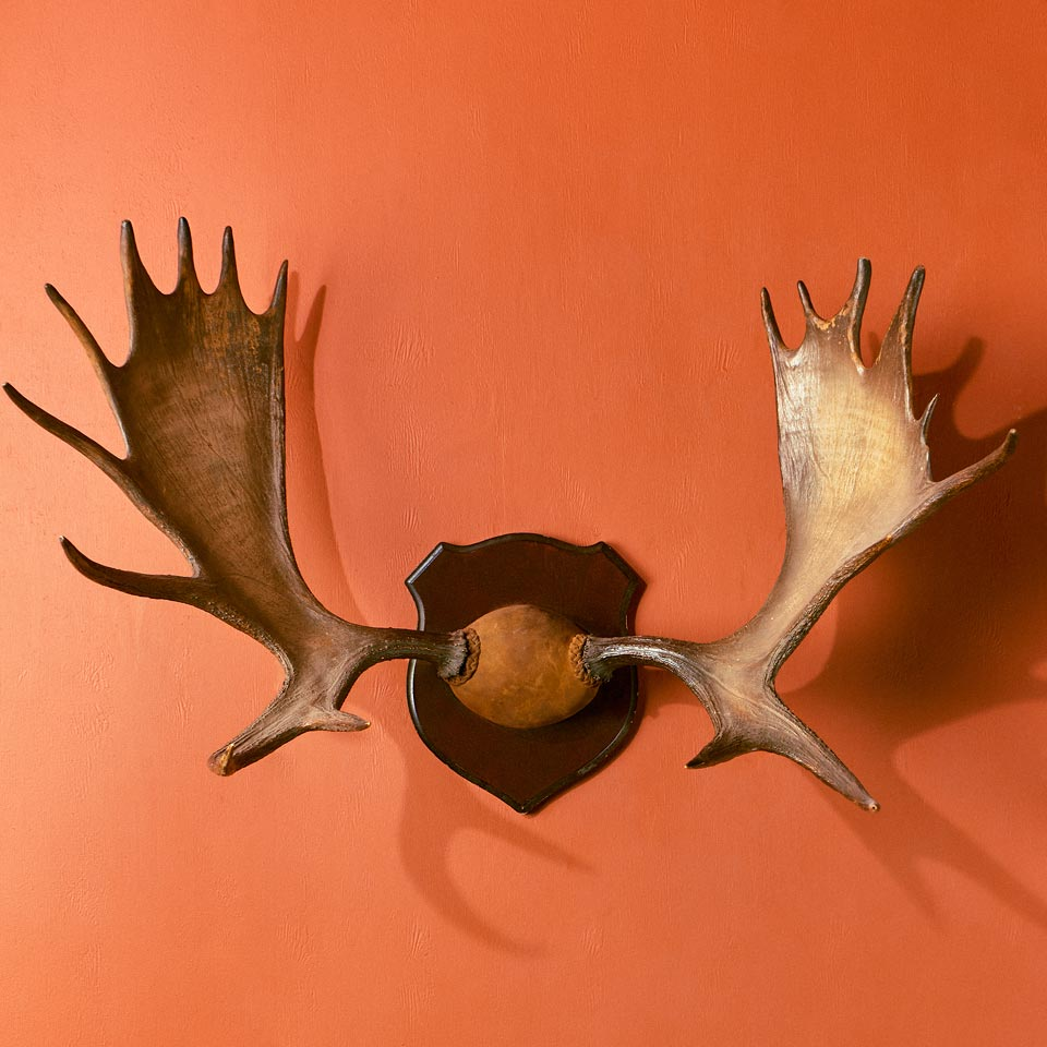Category: Antlers, Horns, and Skulls