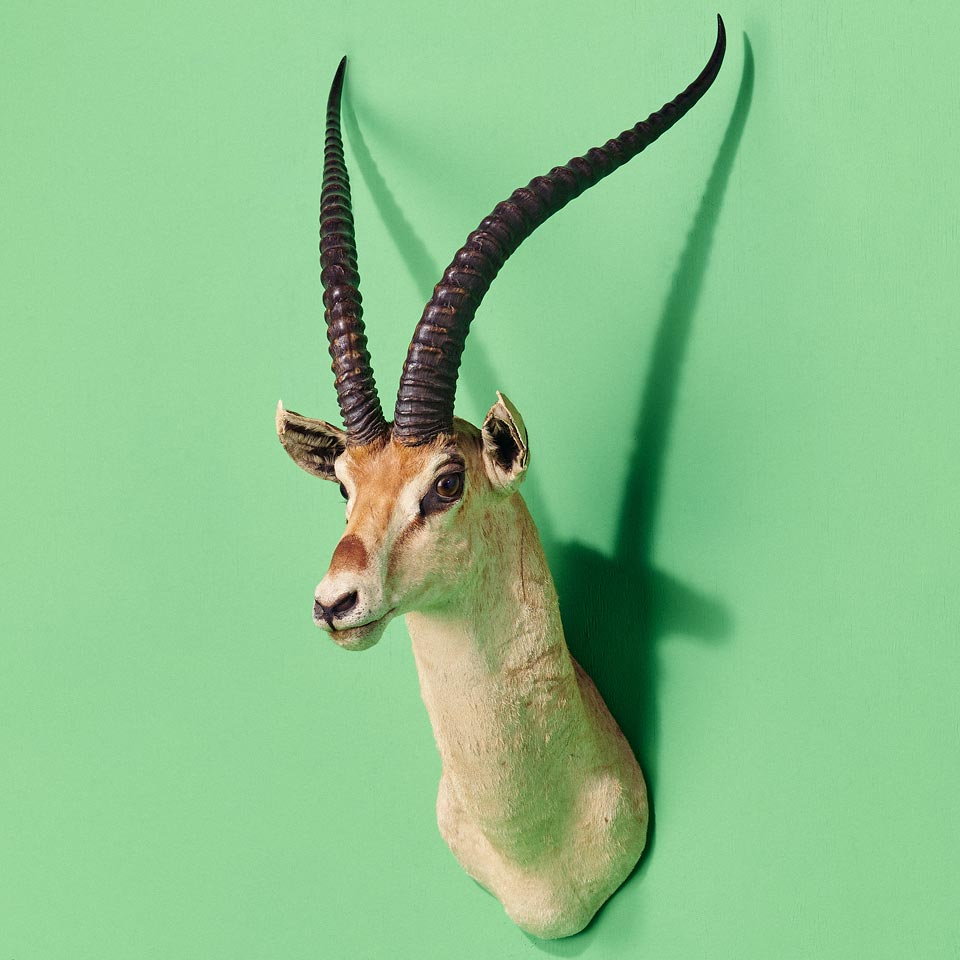 Category: Desert, Plains, and Safari Taxidermy