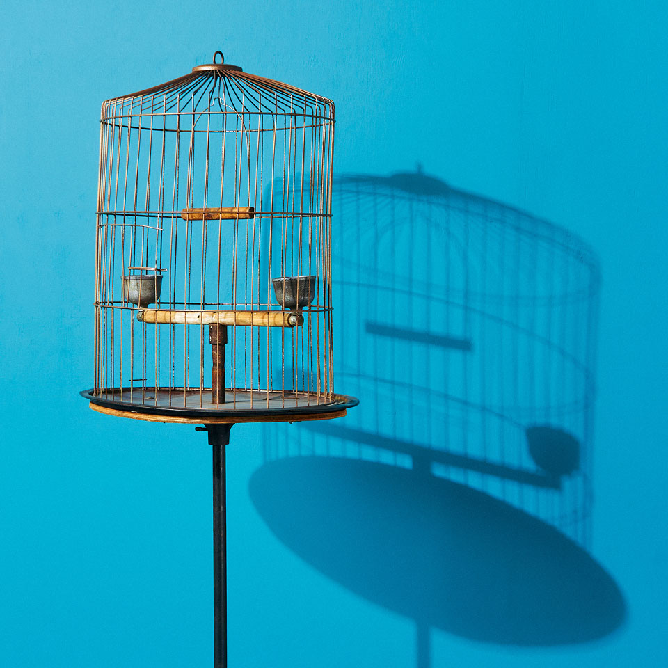 Category: Bird Cages