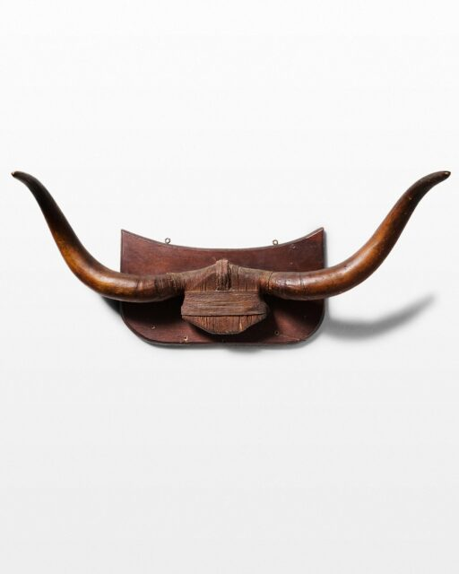 Front view of Crain Mounted Steer Horns