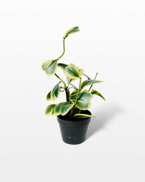 Front view of Linz Potted Faux Trailing Heart Plant
