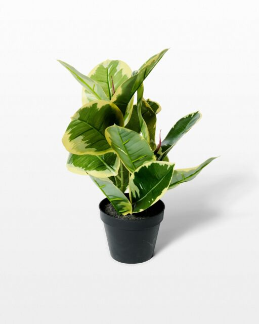 Front view of Kyra Potted Faux Rubber Fig Plant